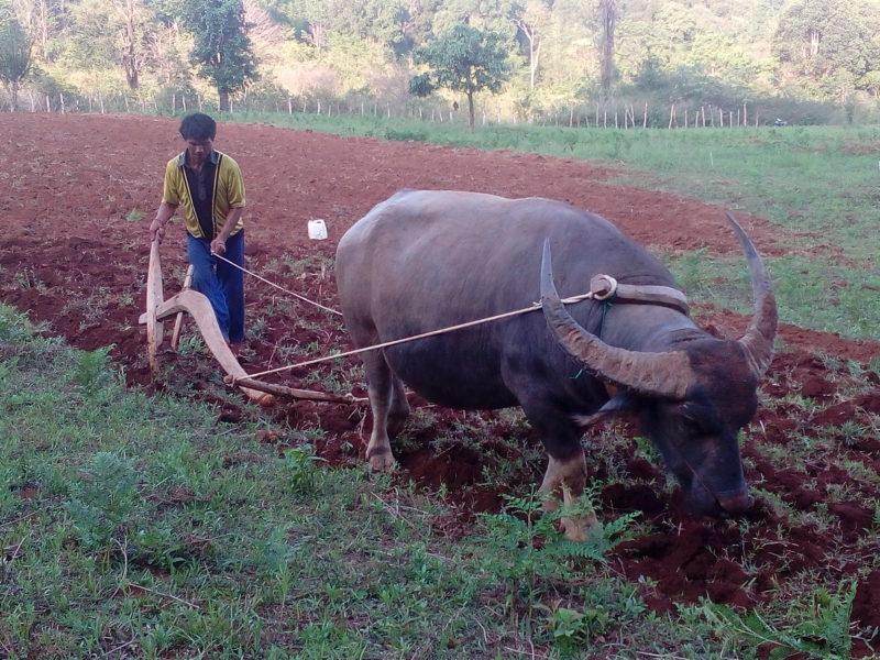 Land Preparation (at Pang Shaw village 2)