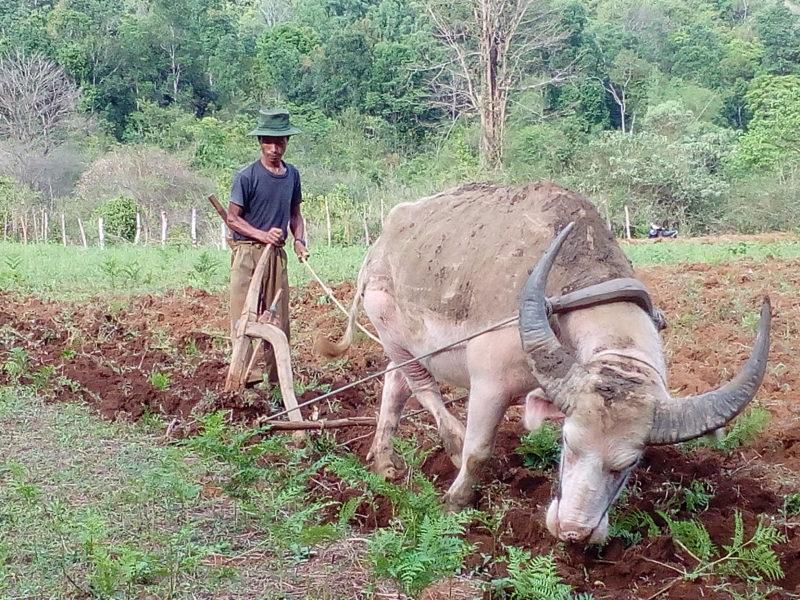 Land preparation (at Pang shaw village)