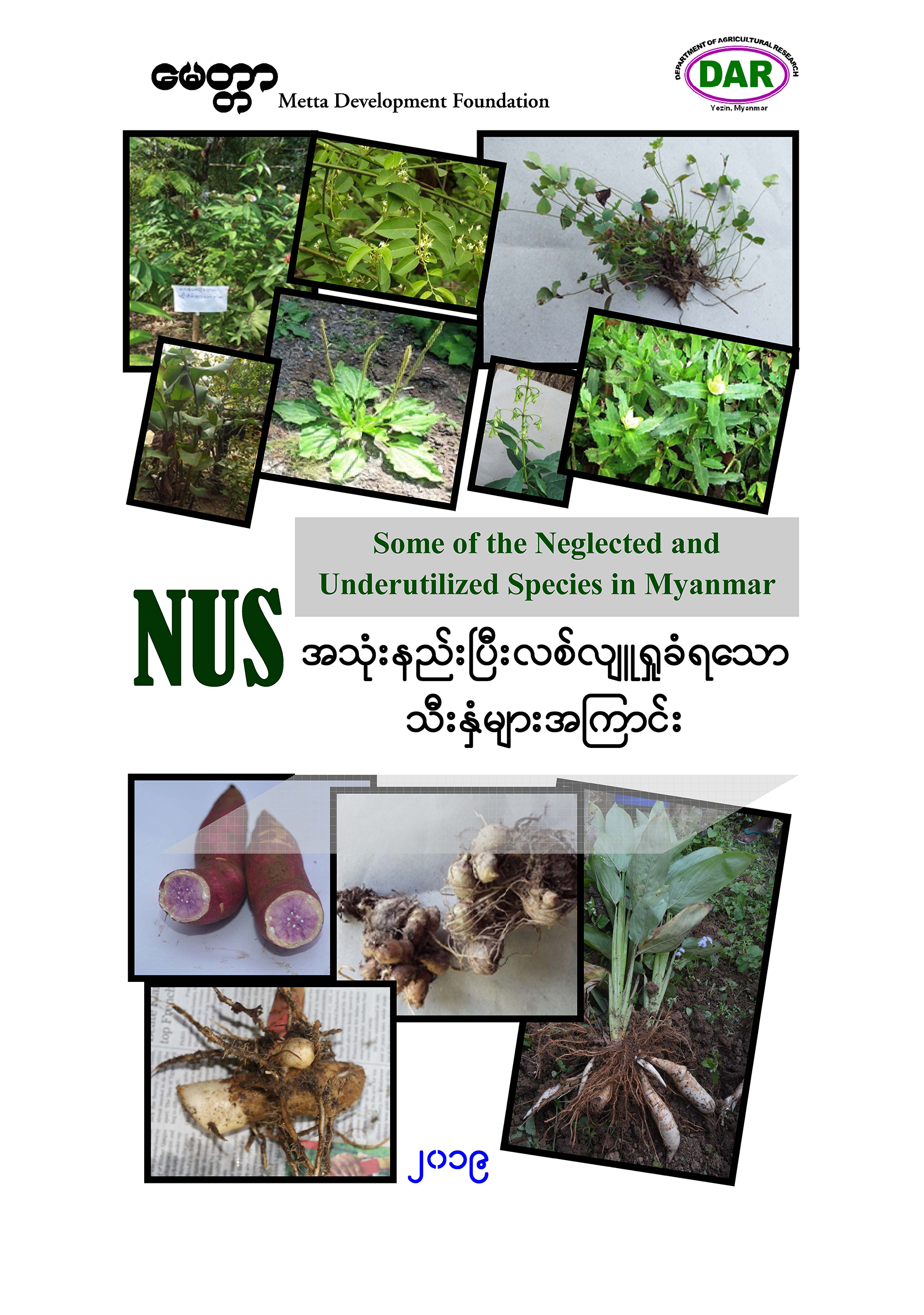Some Of The Neglected And Underutilized Species In Myanmar